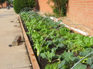 McKinley MS Fall Garden