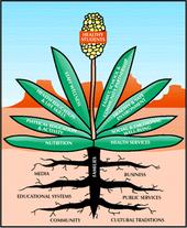 Wellness Yucca