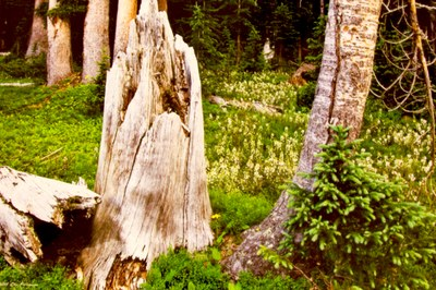 stump and flowers